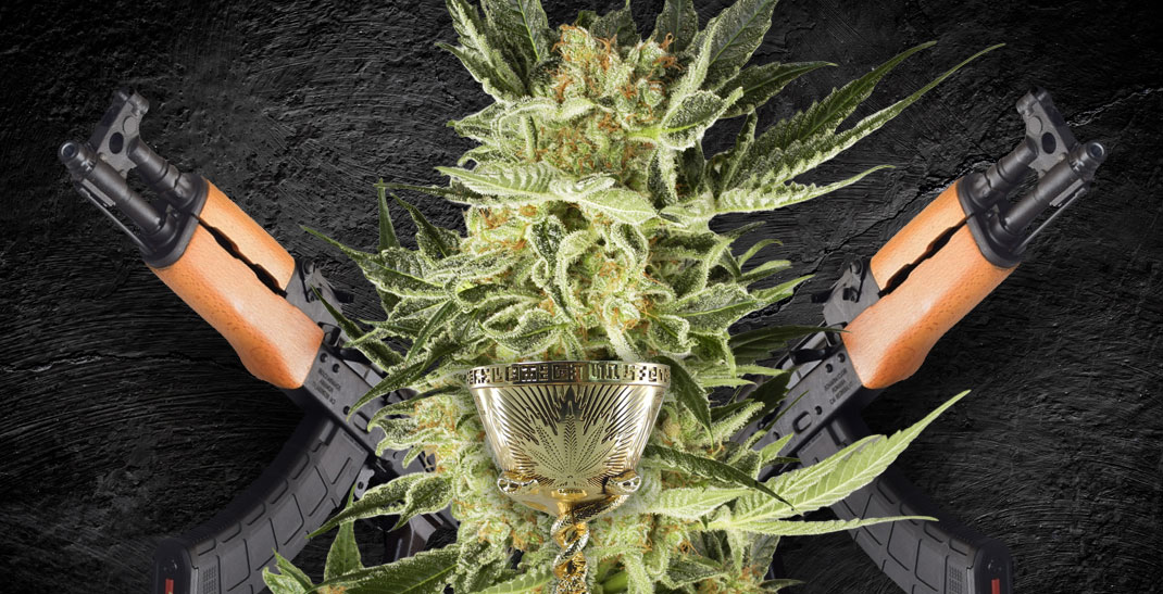 AK-47 Wiet heeft tientallen Cannabis Cups gewonnen.