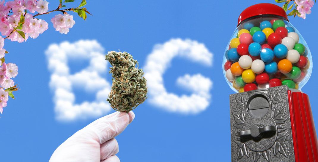 Bubblegum wiet, of Bubble Gum, is geliefd bij rokers over de hele wereld.