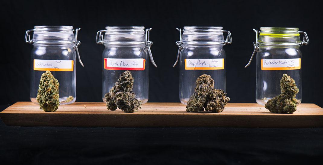 Hybride cannabissoorten