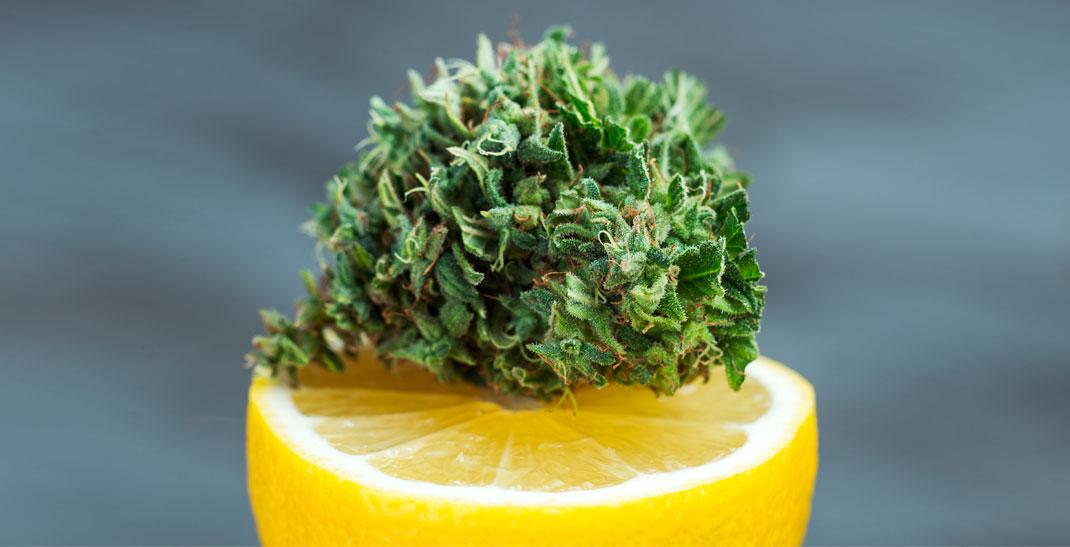 Lemon Kush wiet