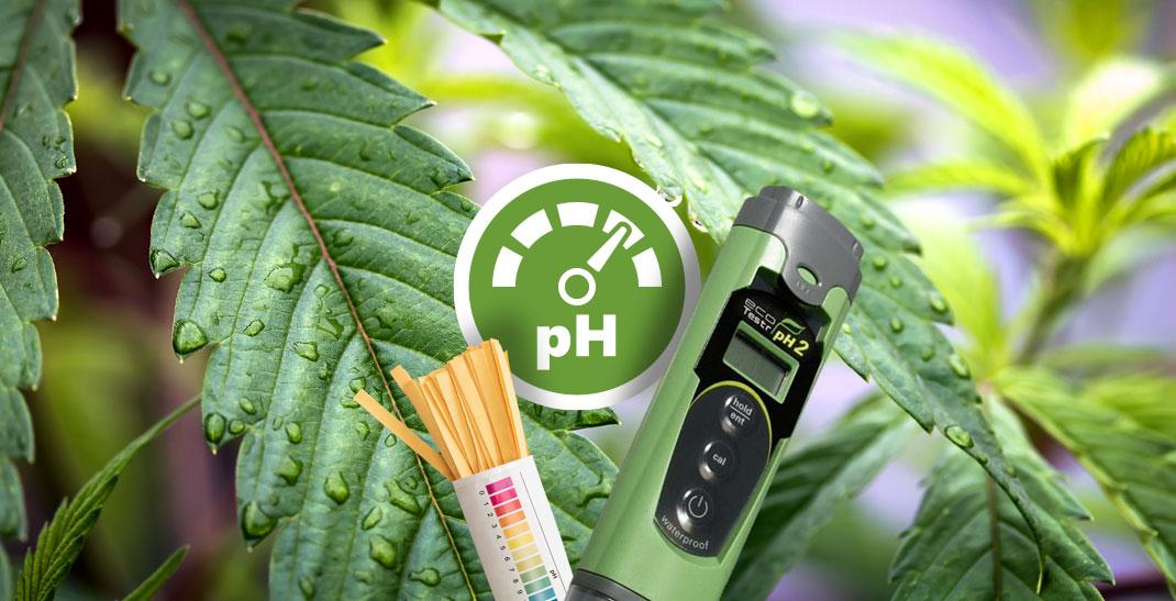 De juiste pH-waarde voor je wietplanten