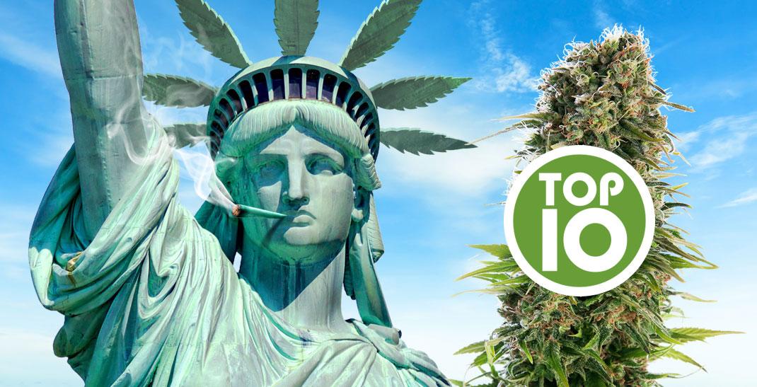 Ontdek de 10 beste Amerikaanse cannabis soorten