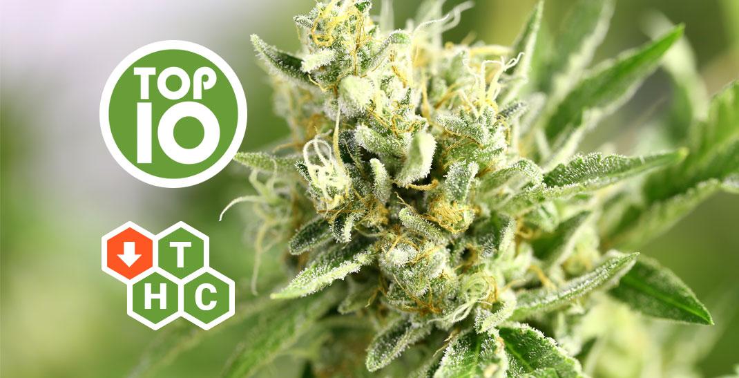 Top 10 strains met een laag THC gehalte