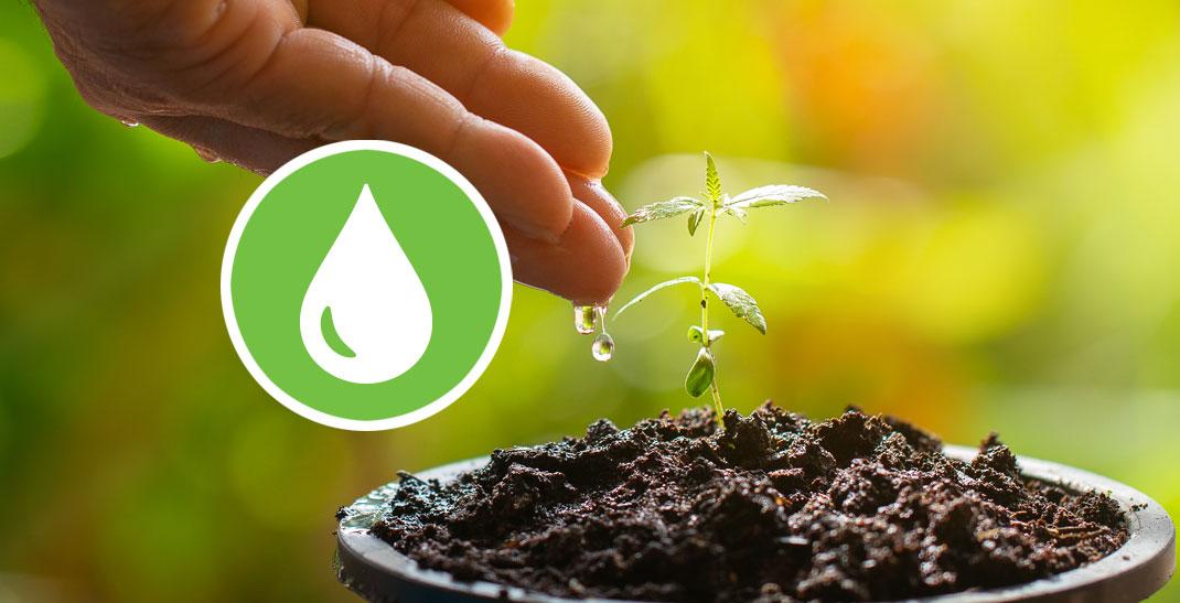 Wietplanten water geven - Hoeveel water heeft een wietplant nodig per dag?