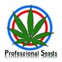 Professional Seeds