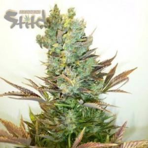 Stitch Love Potion - Flash Seeds