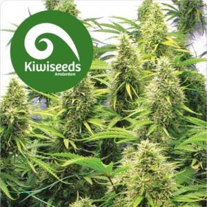 2 Pounder - Kiwi Seeds