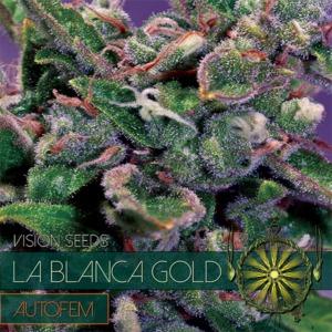 La Blanca Gold Auto - Vision Seeds