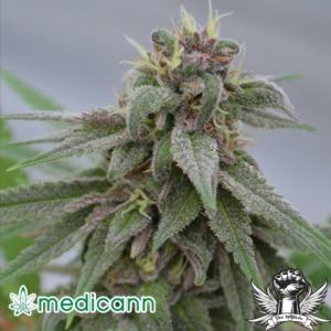 Pure Kush - Medicann Seeds