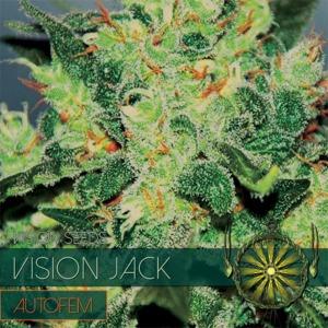 Vision Jack Auto - Vision Seeds