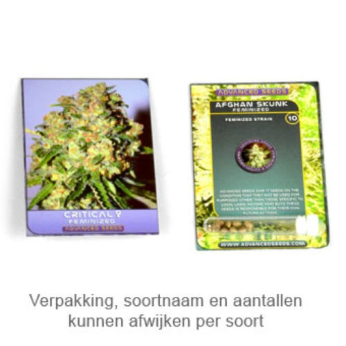 Critical -  Advanced Seeds verpakking