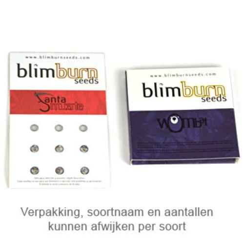 Silver Surfer Haze - Blimburn Seeds verpakking