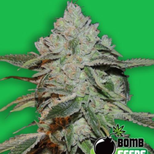Atomic - Bomb Seeds