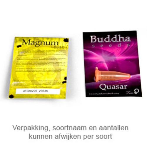 Quasar - Buddha Seeds verpakking