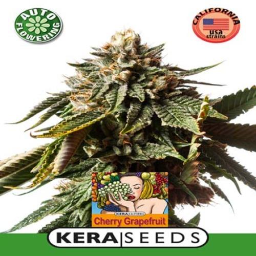 Cherry Grapefruit Auto - Kera Seeds
