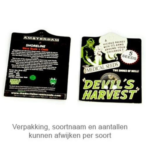 Golden Haze - Devils Harvest verpakking