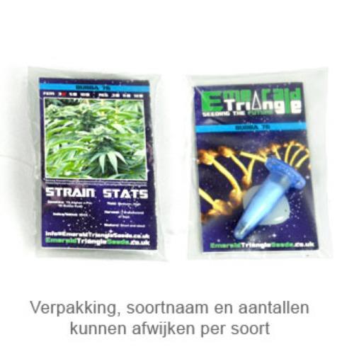 Blueberry Headband - Emerald Triangle package