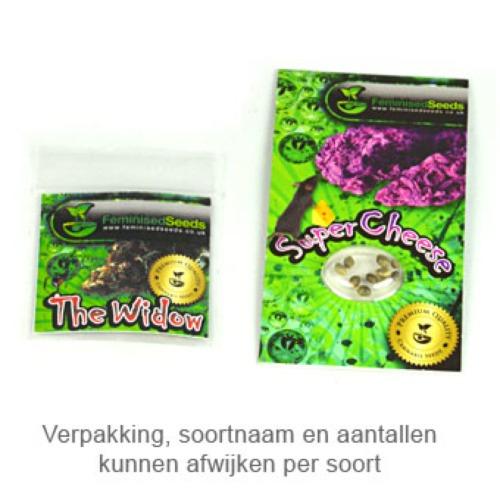 Super Cheese - Feminised Seeds verpakking