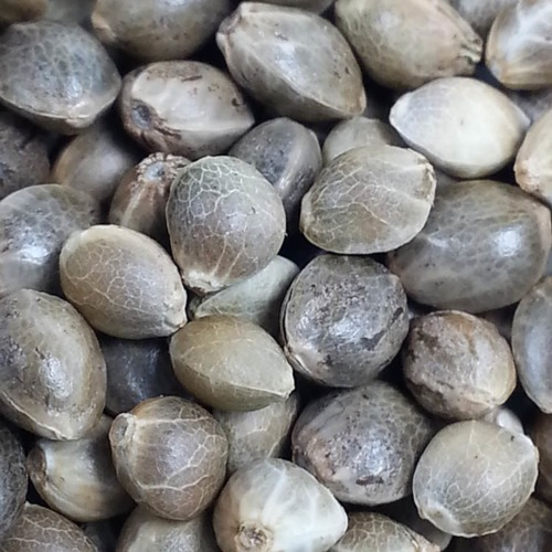 The Ultimate - Our private label picture cannabis seeds