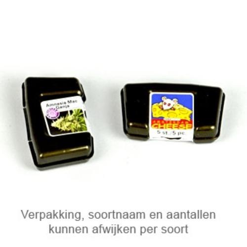 Super Silver Haze - Kera Seeds verpakking