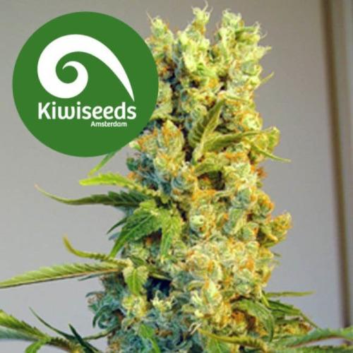 Milky Way - Kiwi Seeds