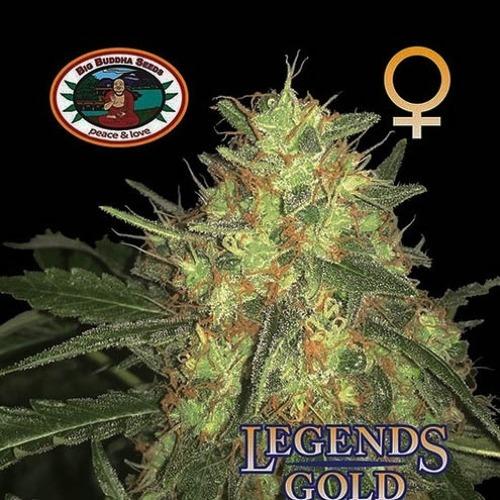 Legends Gold - Big Buddha Seeds