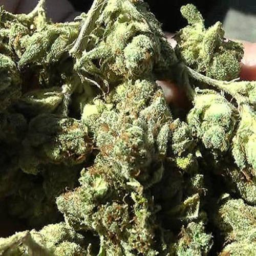 Headband - Loud Seeds wiet roken
