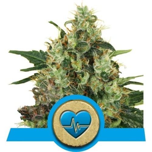 Medical Mass wietsoort - Royal Queen Seeds
