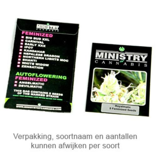 Autopilot XXL - Ministry of Cannabis verpakking