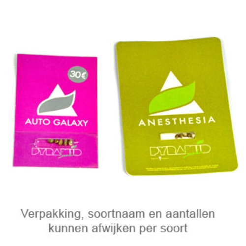 Auto Blue Pyramid - Pyramid Seeds verpakking