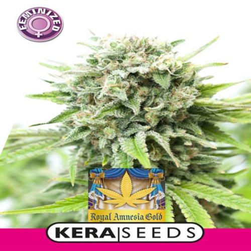Royal Amnesia Gold - Kera Seeds