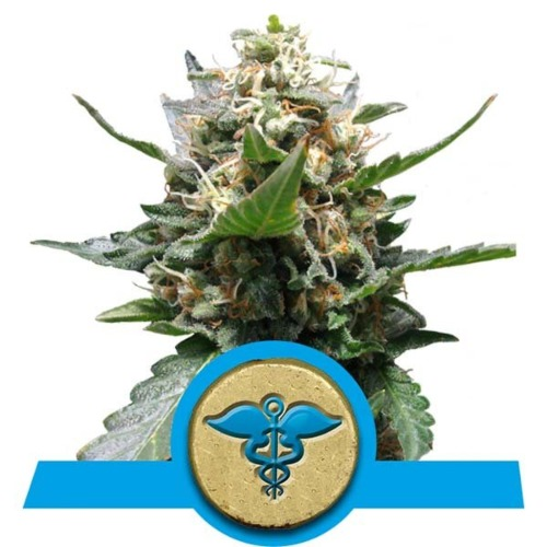 Royal Medic CBD wietsoort van Royal Queen Seeds