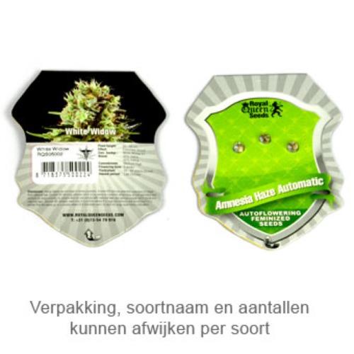 HulkBerry - Royal Queen Seeds verpakking
