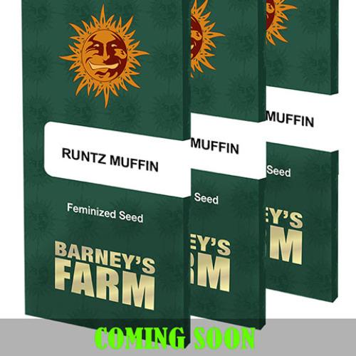 Runtz Muffin - Barney's Farm
