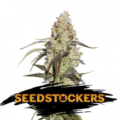 Runtz - Seedstockers