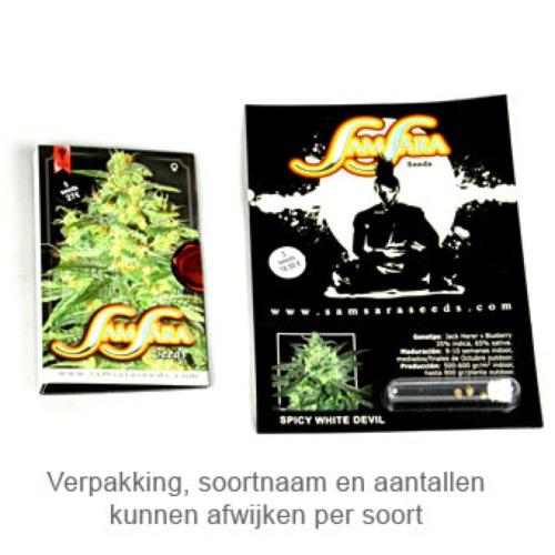 Spice White Devil - Samsara Seeds verpakking