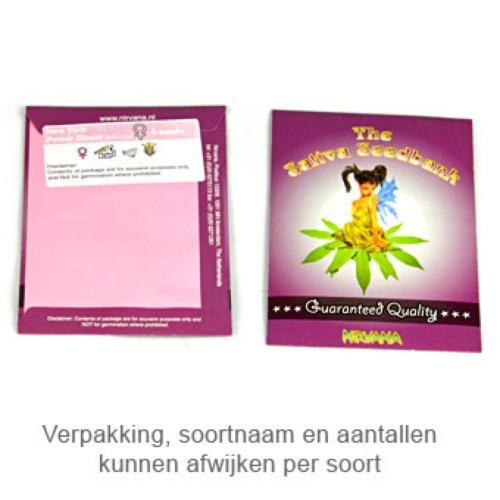 Raspberry Cough - Sativa Seedbank verpakking