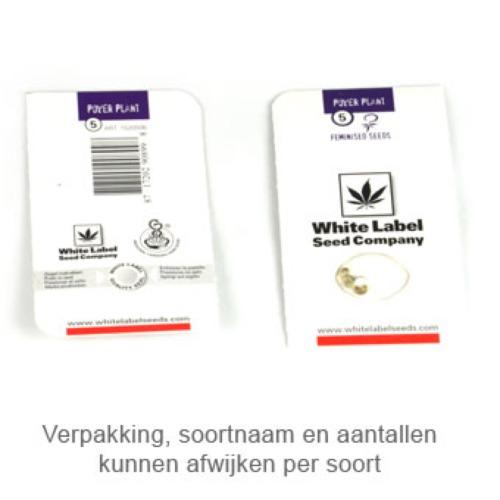 White Widow - White Label verpakking