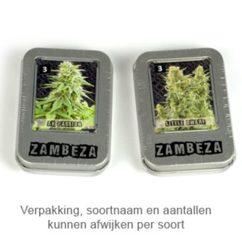White Widow XL - Zambeza Seeds verpakking