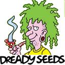 Dready Seeds cannabis seeds
