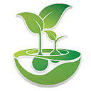 Feminised Seeds cannabis seeds
