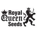 Royal Queen Seeds cannabis seeds