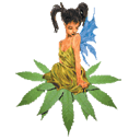 Sativa Seedbank cannabis seeds