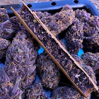 De wiet van de purple haze wordt om pijn, stress en depressie mee te behandelen