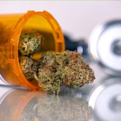 Medicinale cannabis zaden kopen