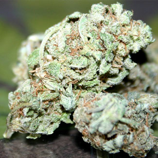 Power Plant marijuana