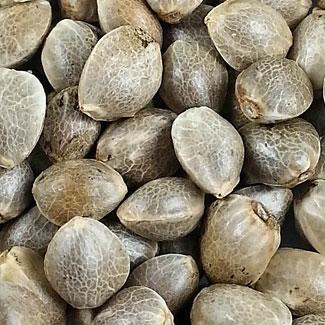 Super Skunk zaden van het Wietzaadjes huismerk