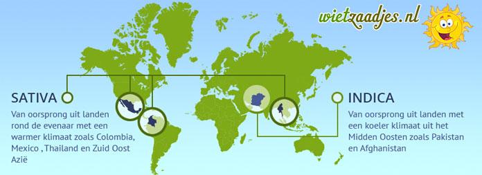 Sativa soorten komen van oorsprong uit landen rond de evenaar met een warmer klimaat zoals Colombia, Mexico , Thailand en Zuid Oost Azië