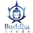 Buddha Seeds wietzaadjes