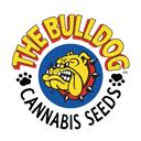 Bulldog Seeds wietzaadjes